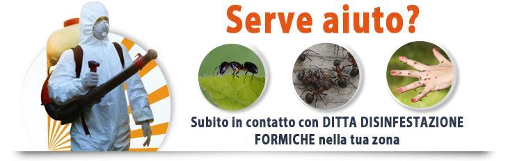 Apricena ditta disinfestazione formiche - Formiche in cucina ...